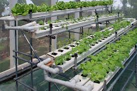hydroponic gardening supplies minneapolis st paul mn online get