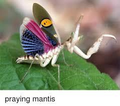 Mantis Meme - praying mantis meme on me me