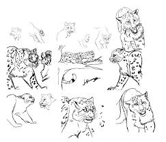 snow leopard study by deafhpn on deviantart