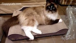 Cat Scratch Lounge Ragdoll Cats Receive Cardboard Cat Scratchers Sleeky Lounge Xl
