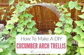 How To Make Trellis For Peas Trellis Diy How To Make A Simple Cucumber Arch Trellis