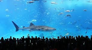 Japanese Aquarium | aquariums in japan