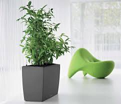 indoor modern planters green indoor office plants kerr pinterest office plants
