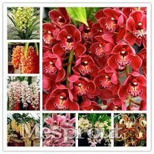 2017 cymbidium orchid rare cymbidium seeds bonsai plants flower