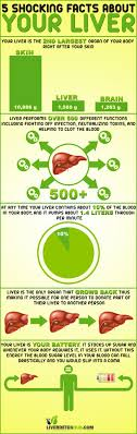 interesting facts about the liver