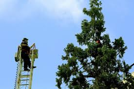 climbs downtown seattle tree creates hourslong standoff the