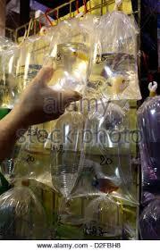 ornamental fish for sale in plastic bags cherchell algeria