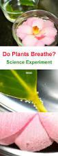 best 25 respiration ideas on pinterest asthme medecin du