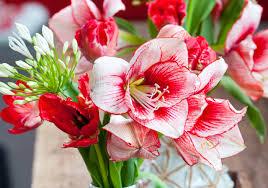 100 bulbs flowers 83 best bulb flowers images on pinterest