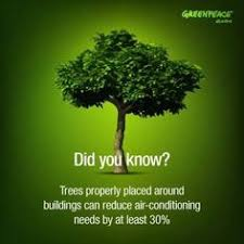 planting of tree facts search packaging
