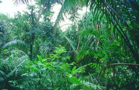 Plants In The Tropical Rain Forest - biomea tropical rain forest