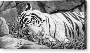 white tiger canvas prints america