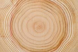 wood tree rings images Royalty free tree rings pictures images and stock photos istock