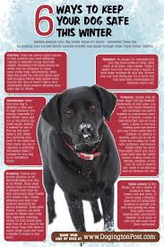 64 best winter pet safety tips images on pinterest safety tips 6 ways to keep your dog safe this winter so much of the country is