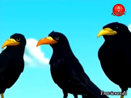 image stuart animated series crows png stuart