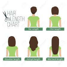 different hair hair length chart back view 5 different hair lengths royalty
