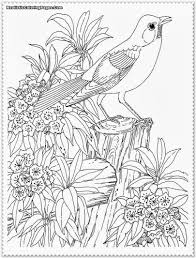 rainforest bird coloring pages