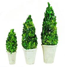 Real Topiary Trees For Sale - exterior awesome boxwood topiary for your garden decor