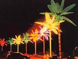 palm trees on houseboats