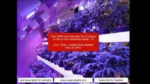 best led grow lights for marijuana best grow lights for cannabis 2016 youtube