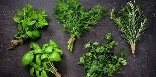 herbe cuisine top 5 de nos herbes aromatiques préférées leurs usages cuisine