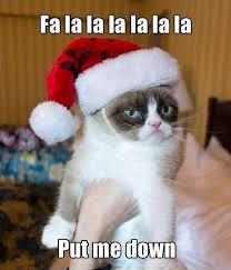 Cat Meme Maker - cute cat meme generator segerios com segerios com