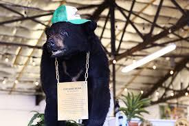 Coke Bear Meme - meet our new mascot cocaine bear kentucky for kentucky