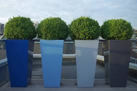 Backyard Ideas For Privacy Outdoors Tall Sculpted Boxwood Planters For Privacy Plants Idea