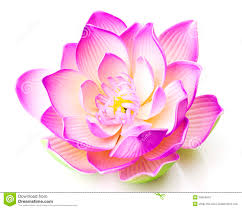 pink lotus flower in bloom royalty free stock photos image 26694018