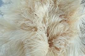 ostrich feather l shade white ostrich feather duster plain useful