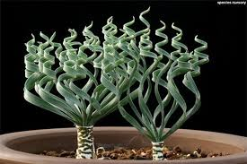 beautiful house plants 15 strange and beautiful houseplants you need to know about