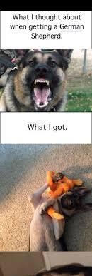 Weiner Dog Meme - pin by reyad cratem on dogs pinterest dog animal and doggies