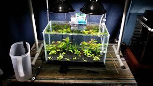 Diy Aquascape 2 5 G Rimless W Lots Of Diy Aquascaping Aquarium Pinterest