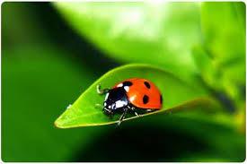 imagenes lindas naturaleza free image bank imágenes de la naturaleza 33 fotos lindas y verdes