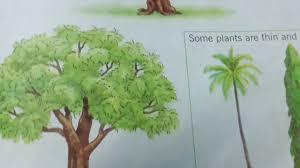 evs plants ukg english evs maths hindi worksheets alphabets ukg