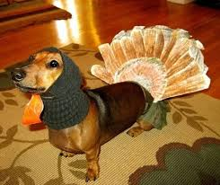 22 best thanksgiving pets images on thanksgiving
