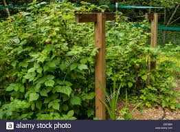trellis arbor stock photos u0026 trellis arbor stock images alamy