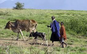 maasai community lengai camp