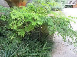 fairchild tropical botanic garden u003e horticulture u003e 2014 members