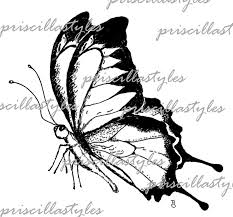 butterfly side view 3274218