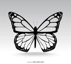 butterfly vector graphics to
