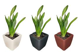 bring home your friendly greens 9 indoor plants that act as air