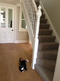 12 best coridor stair carpet images on pinterest stair carpet