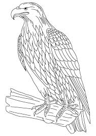 wedge tailed eagle colouring pages eagles wedge