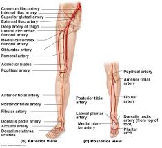 Foot Vascular Anatomy Society Of Interventional Radiology Resident And Fellows Section