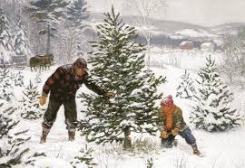 the christmas tree hunt chameleonfire1