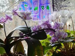 orchids forest garden