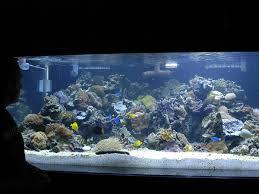 discus types of aquariums