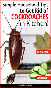 how to get rid of cockroaches in kitchen using simple household tips