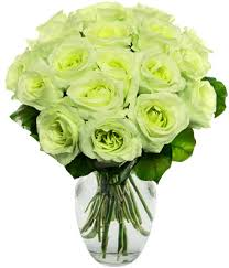 green roses one and a half dozen green roses at from you flowers
